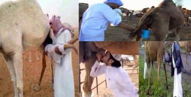 Muslims-drinking-camel-urine